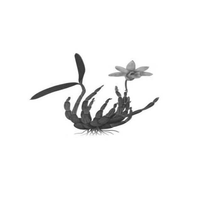 商标文字图形商标注册号 13651810、商标申请人安徽省霍山县福康石斛开发有限公司的商标详情 - 标库网商标查询